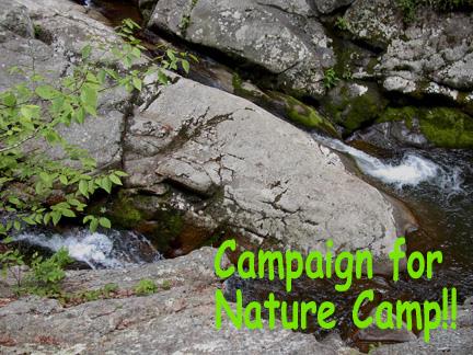 campaigncamp